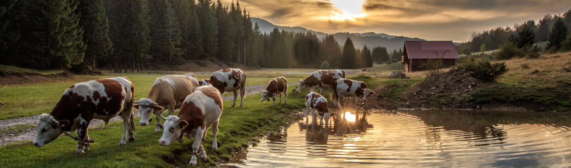 Farm & Agriculture Ponds
