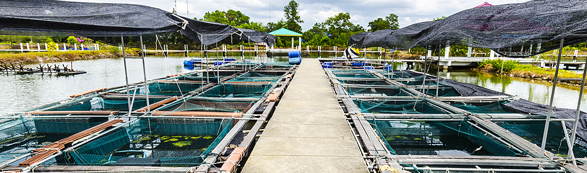 <b>Sustainable</b> Aquaculture Solutions
